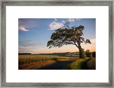 Good Looking Tree Framed Print by Ian Hufton