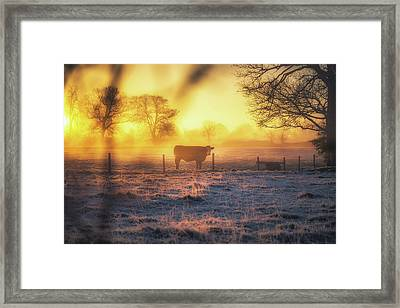 Good Mooorning Framed Print by Chris Fletcher