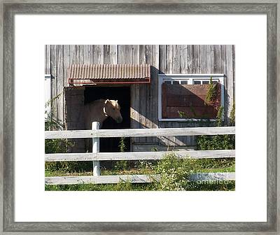 Framed Print featuring the photograph Good Morning - Photograph by Jackie Mueller-Jones