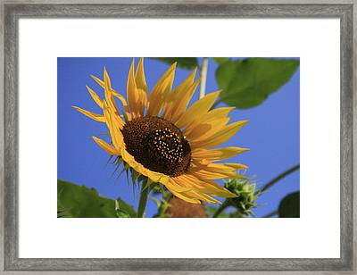 Good Morning Framed Print by Alan Rutherford