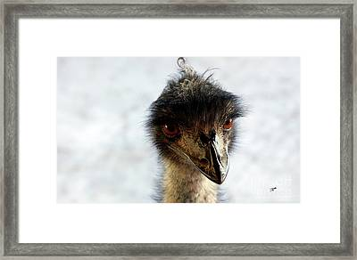 Good Morning Beautiful  Framed Print by Steven Digman
