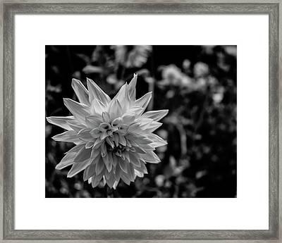 Good Morning Framed Print by Daniel LaFollette