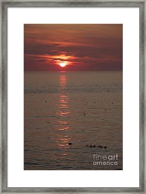 Good Morning Ducks Framed Print