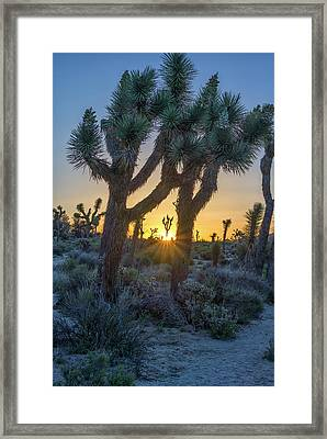 Good Morning From Joshua Tree Framed Print