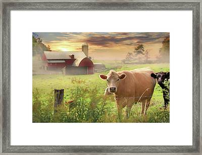 Framed Print featuring the photograph Good Morning by Lori Deiter