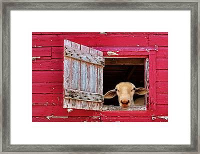 Good Morning Framed Print by Nikolyn McDonald
