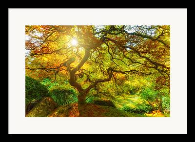 Changing Of The Seasons Framed Prints