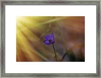 Good Morning Sunshine On Blue Framed Print