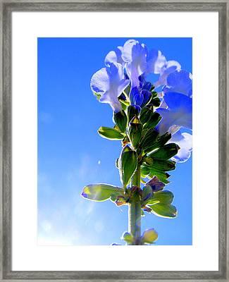Good Morning Sunshine Framed Print by Sherwanda Irvin