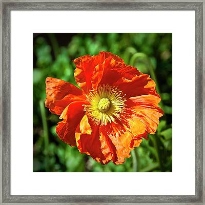 Good Morning Sunshine Framed Print by Tamyra Ayles