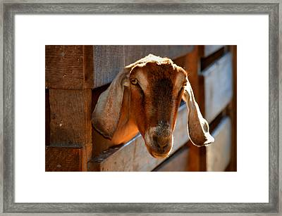 Good Morning To You  Framed Print