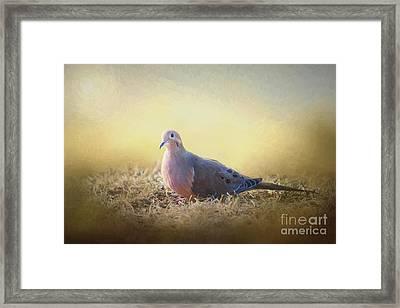 Good Mourning Dove Framed Print