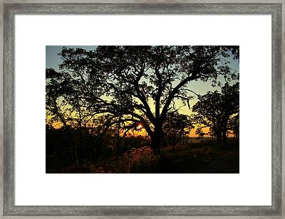 Good Night Tree Framed Print