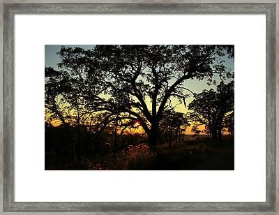 Framed Print featuring the photograph Good Night Tree by Viviana  Nadowski