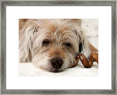 Framed Print featuring the photograph Goodbye Old Friend by Laura Wong-Rose