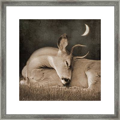 Framed Print featuring the photograph Goodnight Deer by Sally Banfill