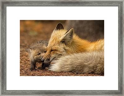 Goodnight Kisses Framed Print by Sandy Sisti