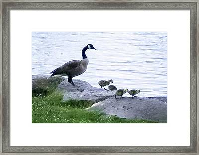 Goose And Chicks Framed Print by Linda Chambers