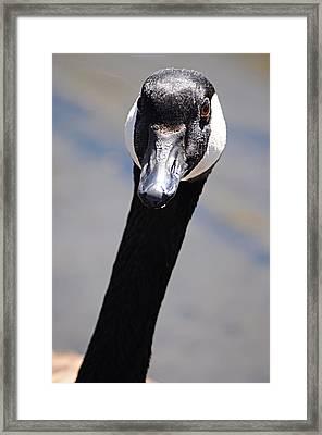 Goose At Belmar 1 Framed Print