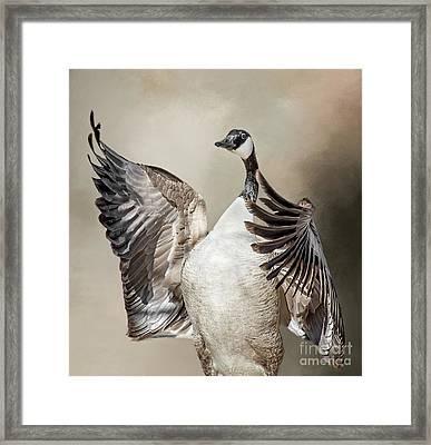 Goose Chase Framed Print