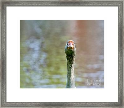 Goose Close-up Framed Print by Patricia Hofmeester