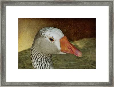 Goose - Domestic Greylag Framed Print by Nikolyn McDonald