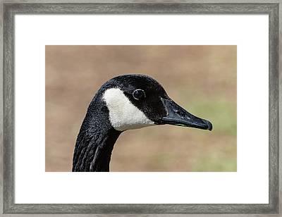 Goose Eye Framed Print