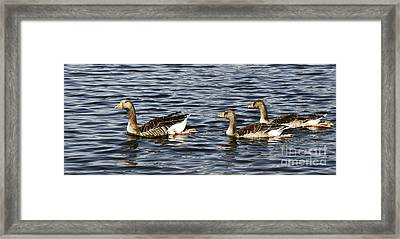 Goose Family Framed Print by Ursula Gill