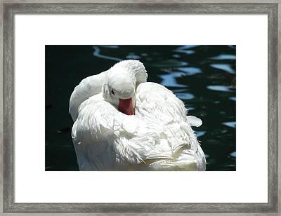 Goose Feather Siesta Framed Print