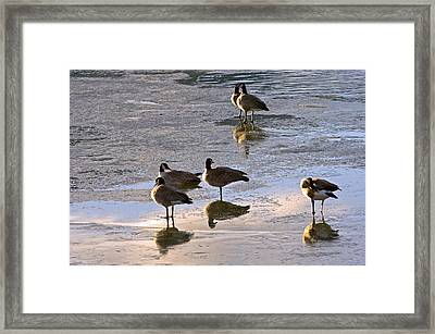 Goose Ice Refections Framed Print by James Steele