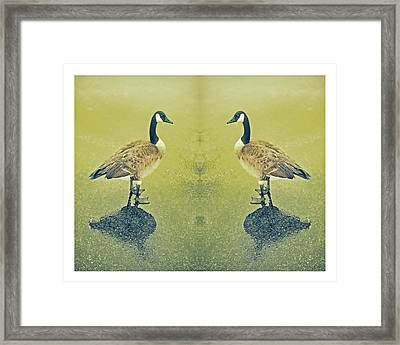 Goose In The Mirror Framed Print by Tony Grider