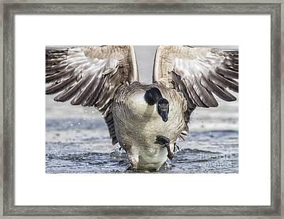 Goose On Inbound Flight Framed Print
