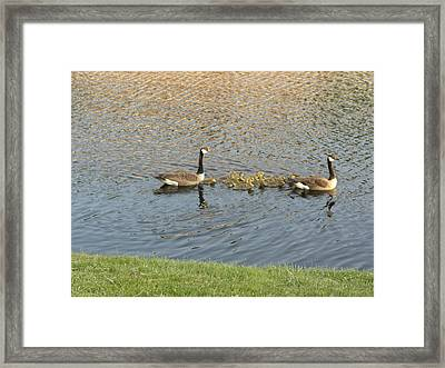 Goose Pond 1 Framed Print by Nancy Ferrier