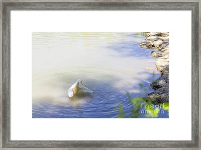 Goose  Framed Print