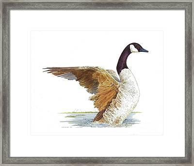 Goose Taking Flight Framed Print by Joyce Hensley