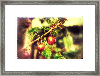 Framed Print featuring the photograph Gooseberry Fool by Isabella F Abbie Shores FRSA