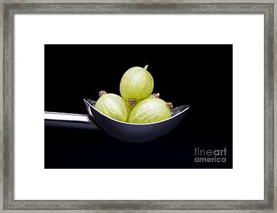 Gooseberry Spoon Framed Print by Tim Gainey