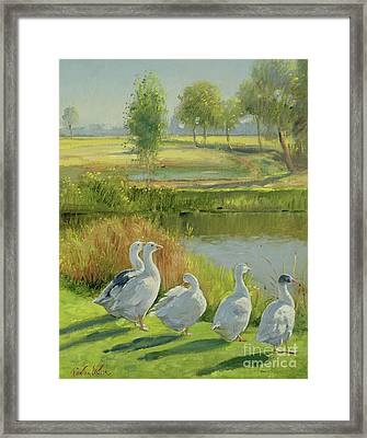Gooseguard Framed Print by Timothy Easton