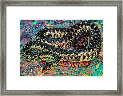 Gopher Snake Framed Print by Pamela Cooper