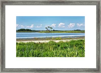 Gordons Pond - Cape Henlopen State Park - Delaware Framed Print by Brendan Reals