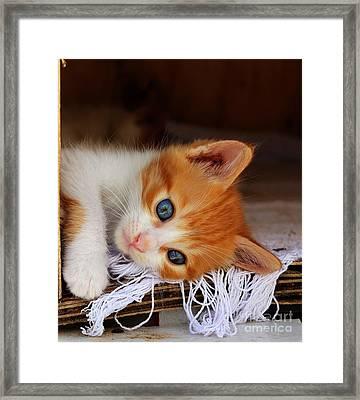 Gorgeous Blue Eyes Framed Print