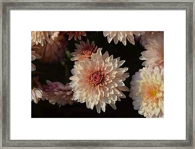 Gorgeous  Framed Print by Eva Maria Nova
