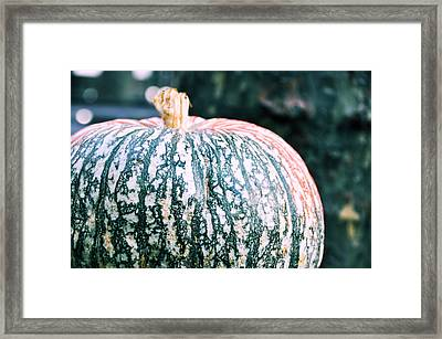 Gorgeous Gourd Framed Print by JAMART Photography