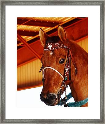 Gorgeous Horse And Bridle Framed Print