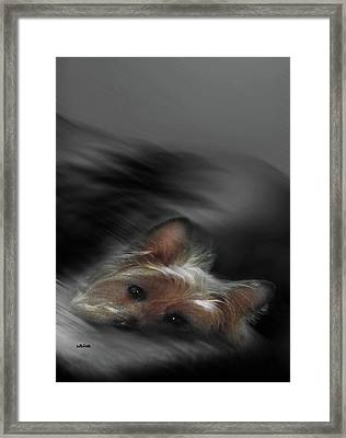 Yorkie Joy Painting Framed Print