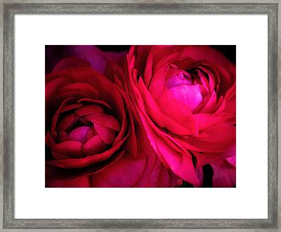 Gorgeous Sisters Framed Print