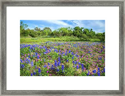 Gorgeous Wildflowers On The Willow City Loop Framed Print by Lynn Bauer