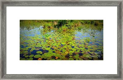 Gorham Pond Lily Pads Framed Print