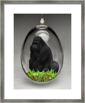 Gorilla Ape Art Framed Print by Marvin Blaine