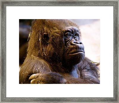 Gorilla Headshot Framed Print by Sonja Anderson